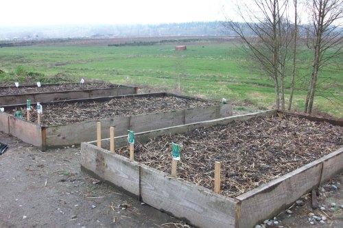 gardenbeds1