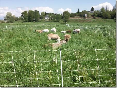 SheepEnclosure