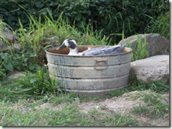 DuckInTub