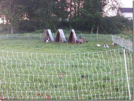birdyard