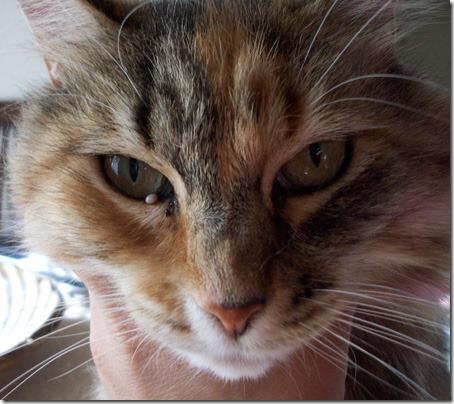 CatTick