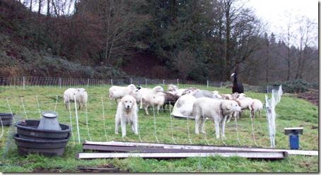 SheepCamp