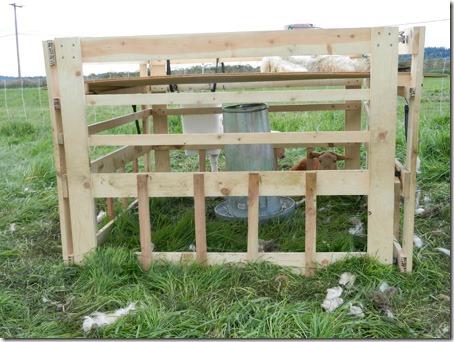 Plans Build Calf Creep Feeder