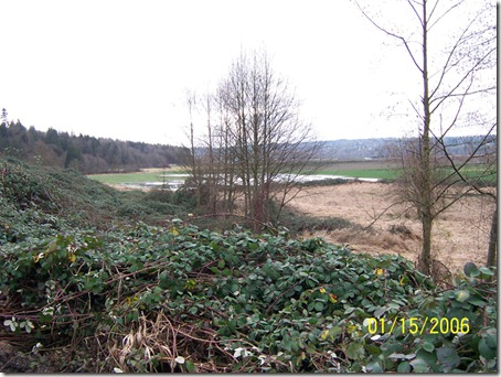 Blackberry thicket on hillside