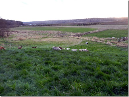 Rotational grazing on hillside