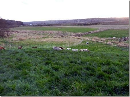 Rotational grazing on hillside