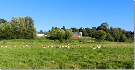 Pastures in grazing rotation