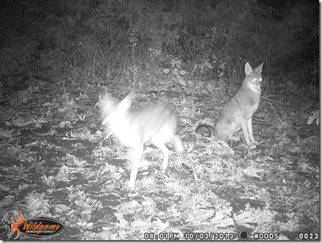 CoyoteSitting